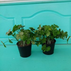 Set of two 3 leaf clover artificial plants